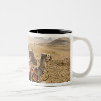 Egypt, Cairo. Resting camels gaze across the Two-Tone Coffee Mug