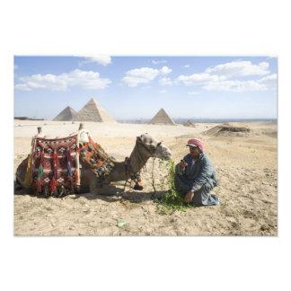 Egypt, Giza. Native man feeds his camel in Photograph