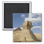 Egypt, Giza. The great Sphynx rises above the Square Magnet