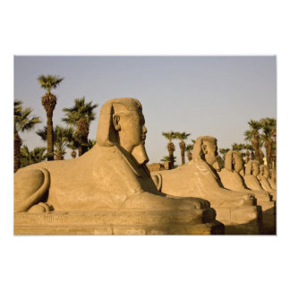 Egypt, Luxor. The Avenue of Sphinxes leads to Photograph