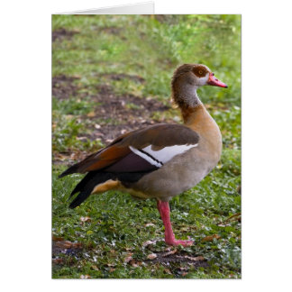 Egyptian Goose Card