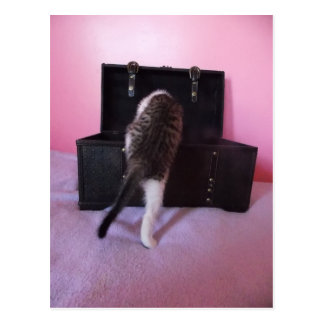 Egyptian Mau Mix kitten postcard