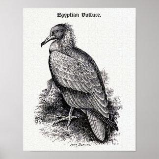 """""""Egyptian Vulture"""" Vintage Illustration Poster"""