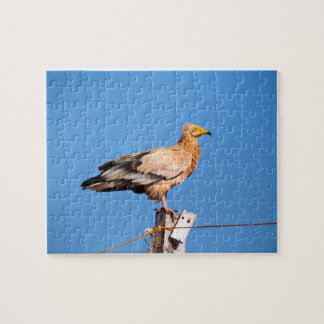 Egyptian Vulture, white scavenger vulture Jigsaw Puzzle