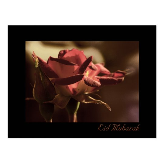 Eid Mubarak - red rose postcard