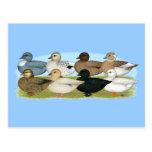 Eight Call Ducks