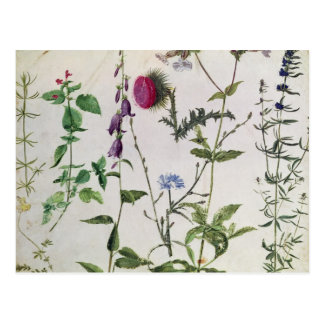 Eight Studies of Wild Flowers Postcard