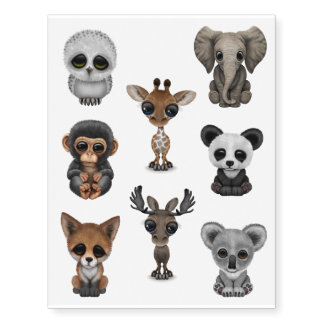 Eight Wild Animal Babies Collection