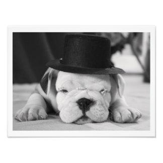 """""""Einstein"""" English Bulldog Puppy Photo Print"""
