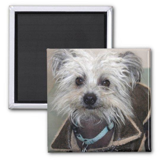 Einstein the Dog Square Magnet