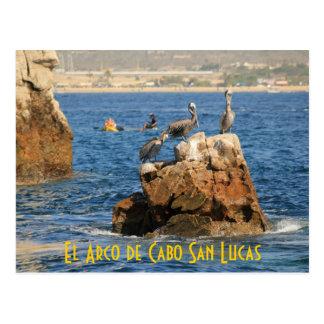 El Arco de Cabo San Lucas Pelicans Postcard