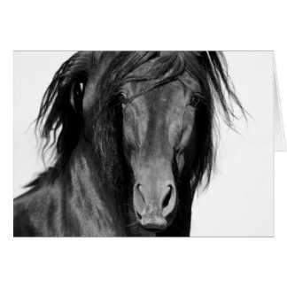 El Caballo Negro Horse Greeting Card