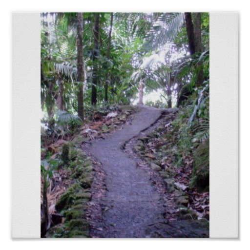 El Yunque National Forest Poster