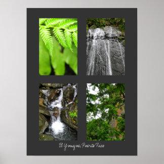 El Yunque National Rainforest, Puerto Rico Print
