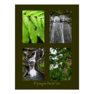 El Yunque National Rainforest, Puerto Rico Poster