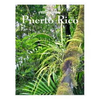 El Yunque, Puerto Rico Postcard