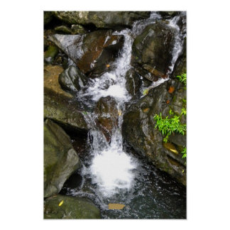 El Yunque Rainforest with map, Puerto Rico Poster