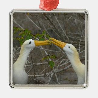 Elaborate courtship dance of Waved Albatros, Christmas Ornament
