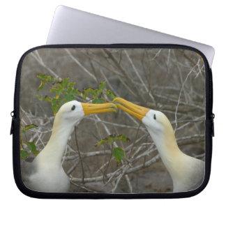 Elaborate courtship dance of Waved Albatros, Laptop Sleeve