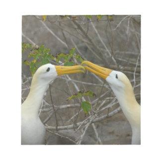 Elaborate courtship dance of Waved Albatros, Notepad