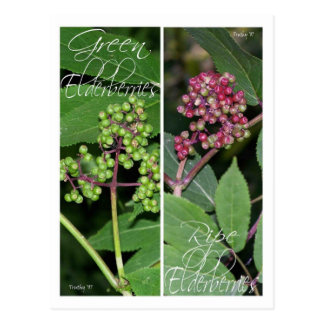 ELDERBERRY BOOKMARKS POSTCARD