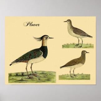 Eleazar Albin's Plovers Poster