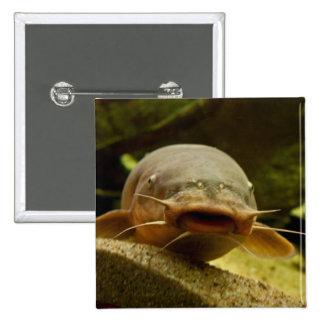 Electric catfish 15 cm square badge