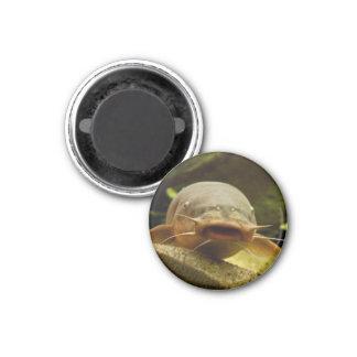 Electric catfish fridge magnet