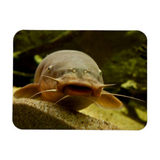 Electric catfish magnet