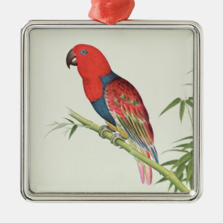 Electus Parrot, on a bamboo shoot Silver-Colored Square Decoration