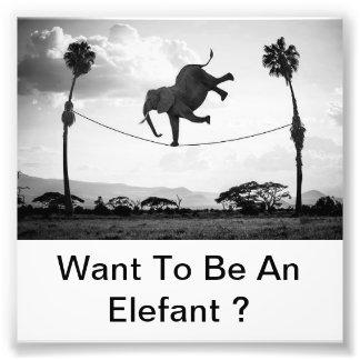 Elefant! Photo