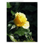 Elegant and Understated Single Yellow Rose in Bloo Cards