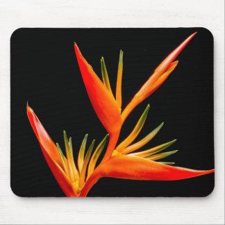 Elegant, beautiful, Bird of Paradise flower Mouse Pad