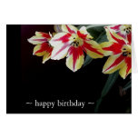 Elegant Birthday Cards- Red & Yellow Tulips Note Card