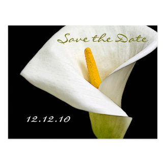 Elegant Cala Lily - Save the Date Card Postcard