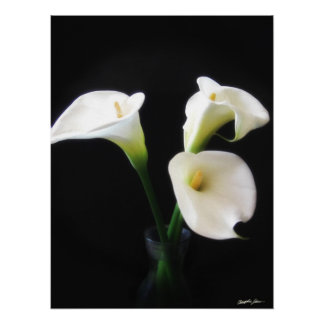 Elegant Calla Lily Flowers 12 Poster