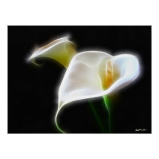 Elegant Calla Lily Flowers 16 Modern Poster