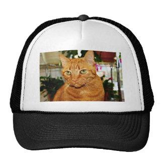 Elegant Cat Cap
