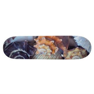 Elegant Companions Seashell Medley 19.7 Cm Skateboard Deck