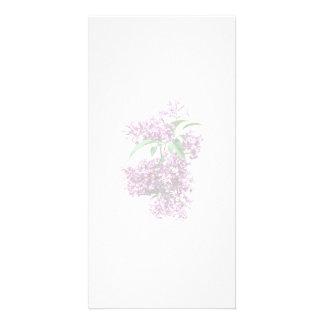 Elegant Lilacs Picture Card