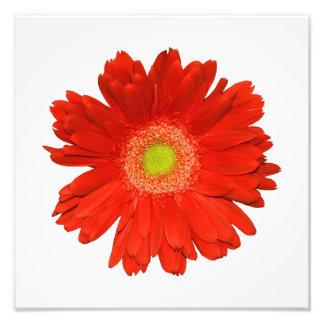 Elegant Orange Daisy Photo Print