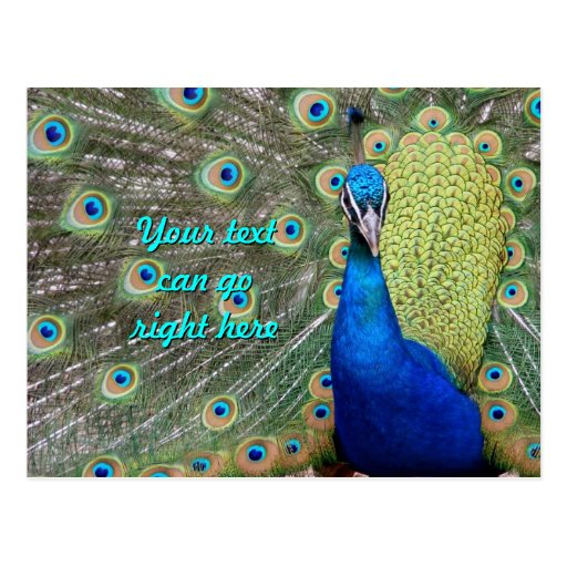 Elegant Peacock Photograph Post Card