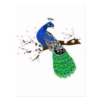 Elegant Peacock with Sakura blossoms Postcard