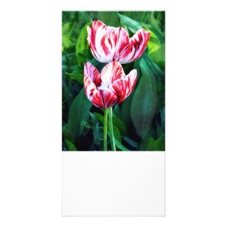Elegant Pink And White Striped Tulips Customised Photo Card