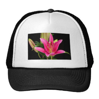 Elegant Purple Pink Flower Floral Gifts Template Hat