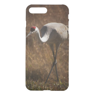 Elegant Sandhill Crane iPhone 8 Plus/7 Plus Case