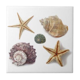 Elegant seashells shabby chic beach small square tile