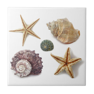 Elegant seashells shabby chic beach tile