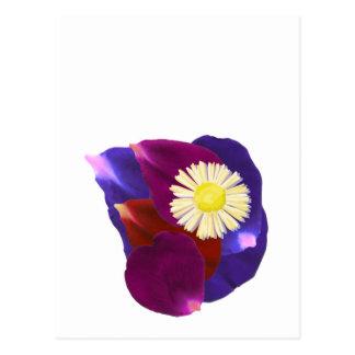 Elegant Sensual Rose Petal Art Postcard