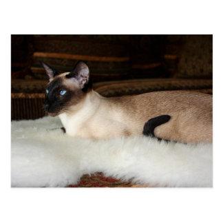Elegant Siamese Cat Postcard